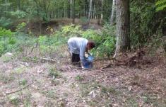 Akce čistý les